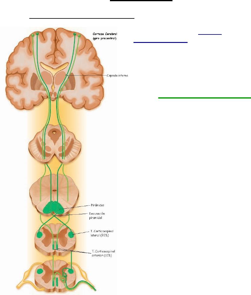 Resumen Resumen Snell Neuro Neurofisiología Y Psicofisiología Psicología Unc Filadd